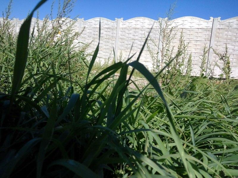Плетень с ковкой верхушка   Фото - 5